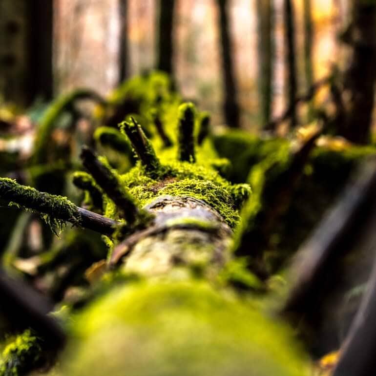 mtubach Photografie | Landscape